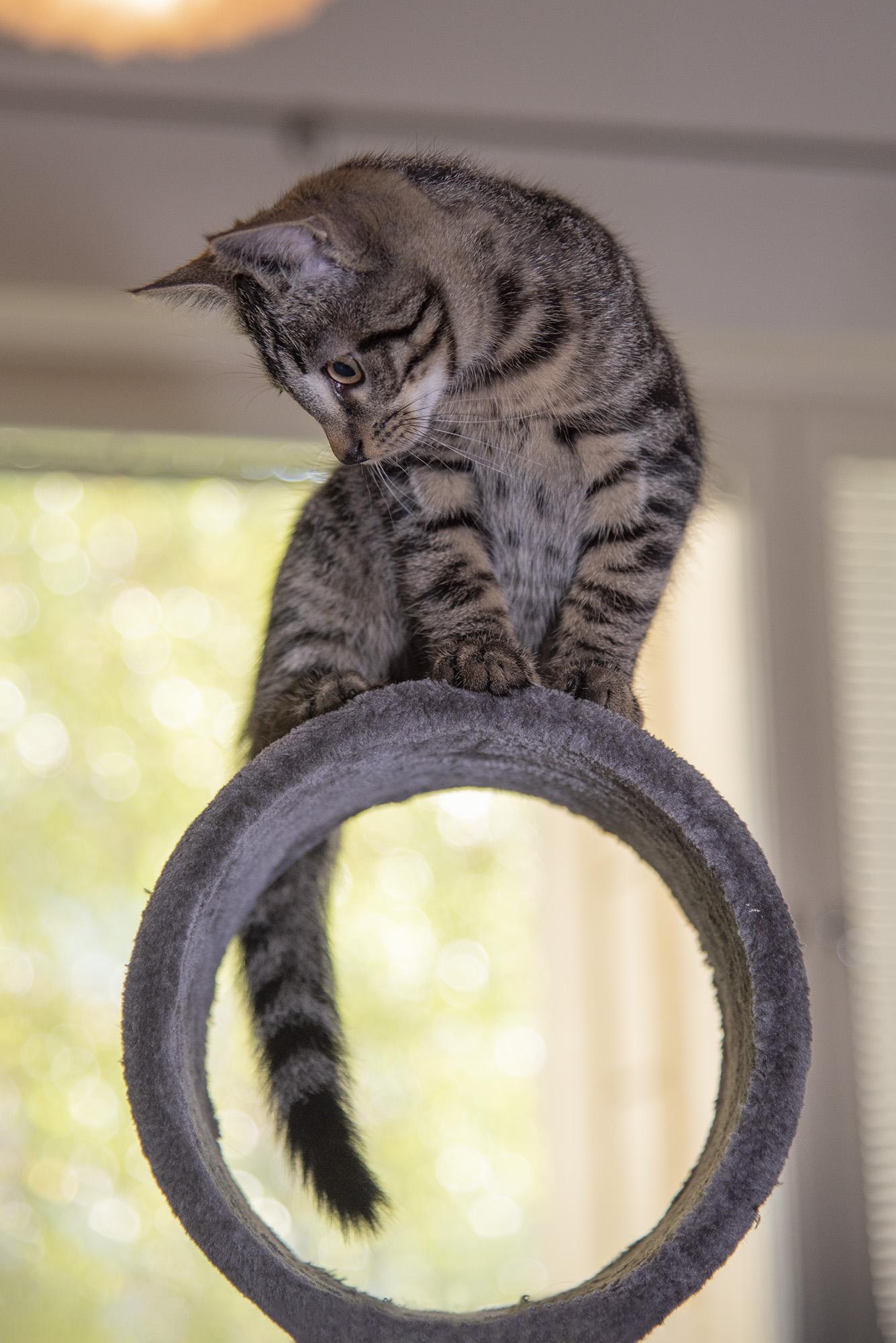 lemmikkikuvaus kissakuvaus 9