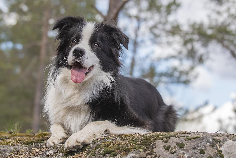 valokuvaus lemmikkikuvaus koirakuvaus