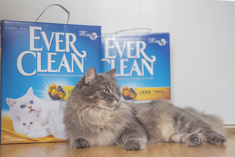 valokuvaus lemmikkikuvaus kissakuvaus