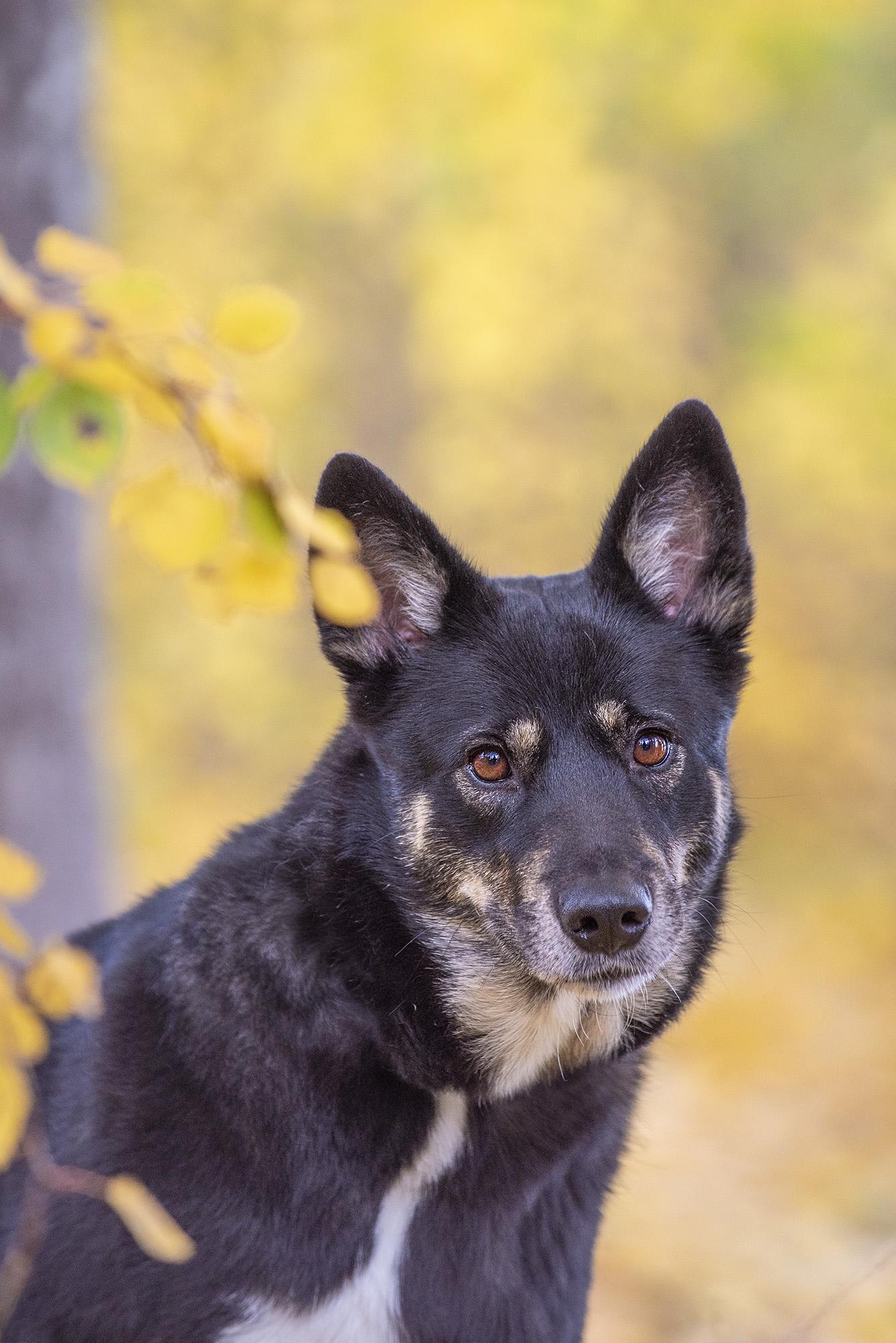 valokuvaus koirakuvaus potrettikuvaus
